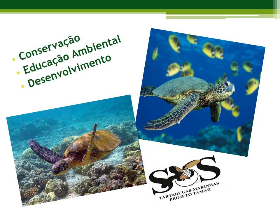 Conservação Educação Ambiental Desenvolvimento