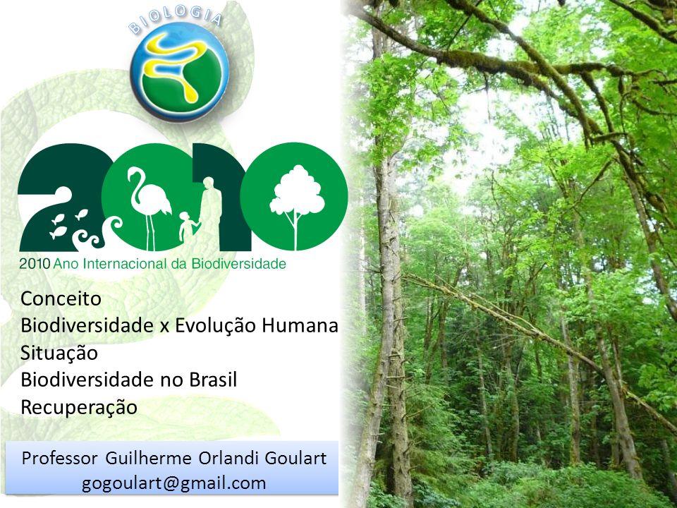 Professor Guilherme Orlandi Goulart gogoulart@gmail.com