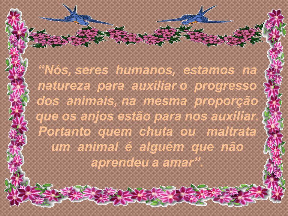 Nós, seres humanos, estamos na natureza para auxiliar o progresso