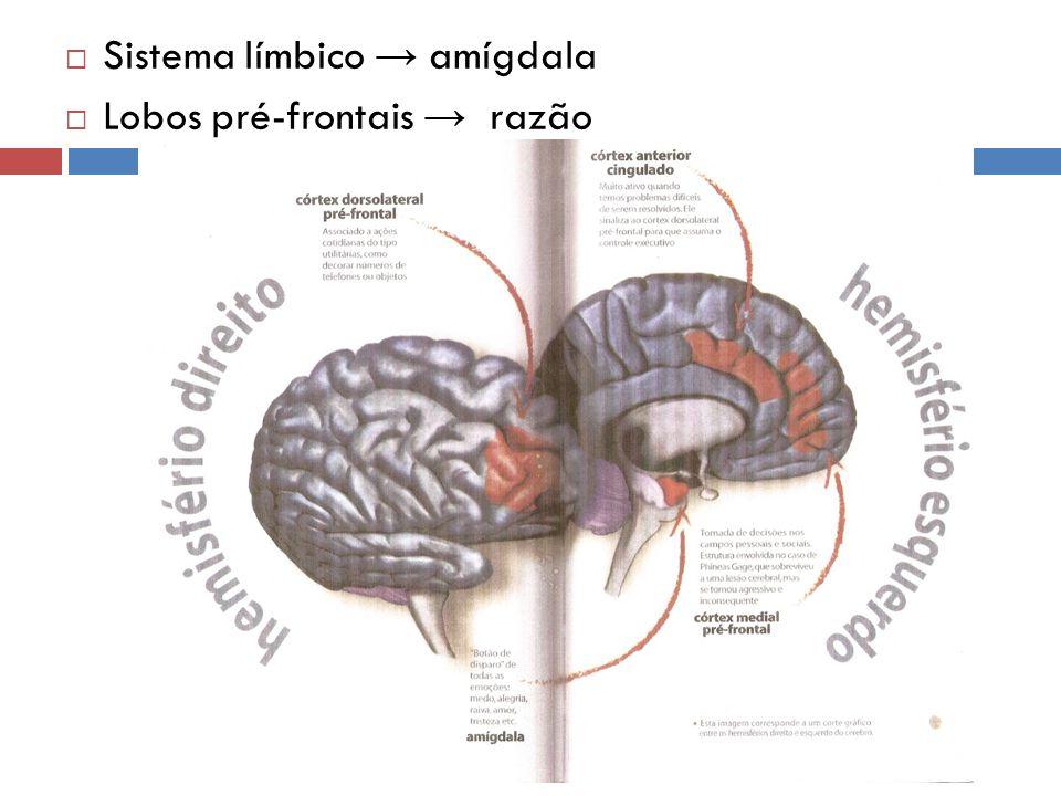 Sistema límbico → amígdala