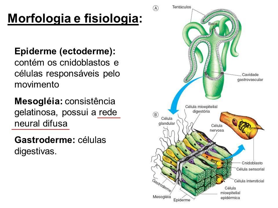 Morfologia e fisiologia: