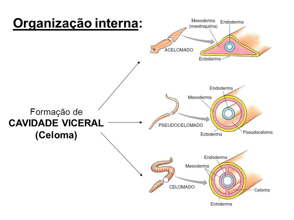 Organização interna: Formação de CAVIDADE VICERAL (Celoma)