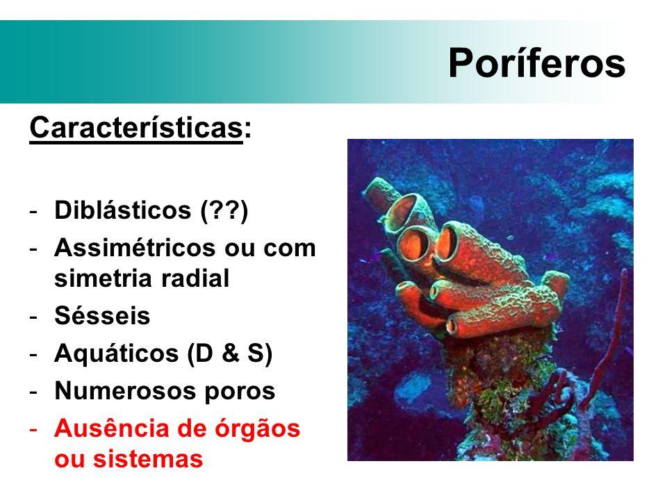 Poríferos Características: Diblásticos ( )