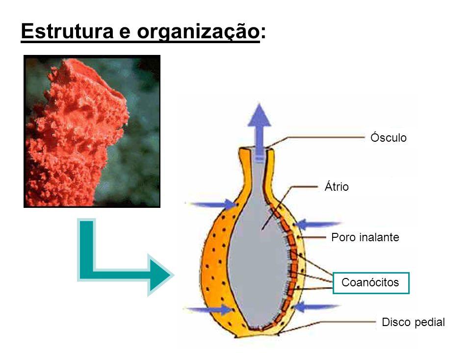 Estrutura e organização:
