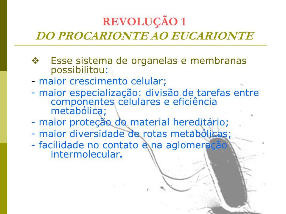 REVOLUÇÃO 1 DO PROCARIONTE AO EUCARIONTE