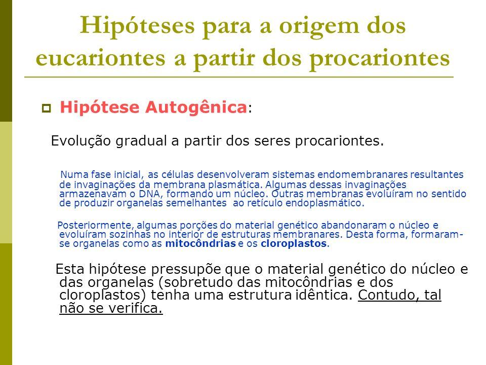 Hipóteses para a origem dos eucariontes a partir dos procariontes