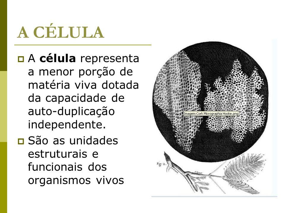 A CÉLULA A célula representa a menor porção de matéria viva dotada da capacidade de auto-duplicação independente.