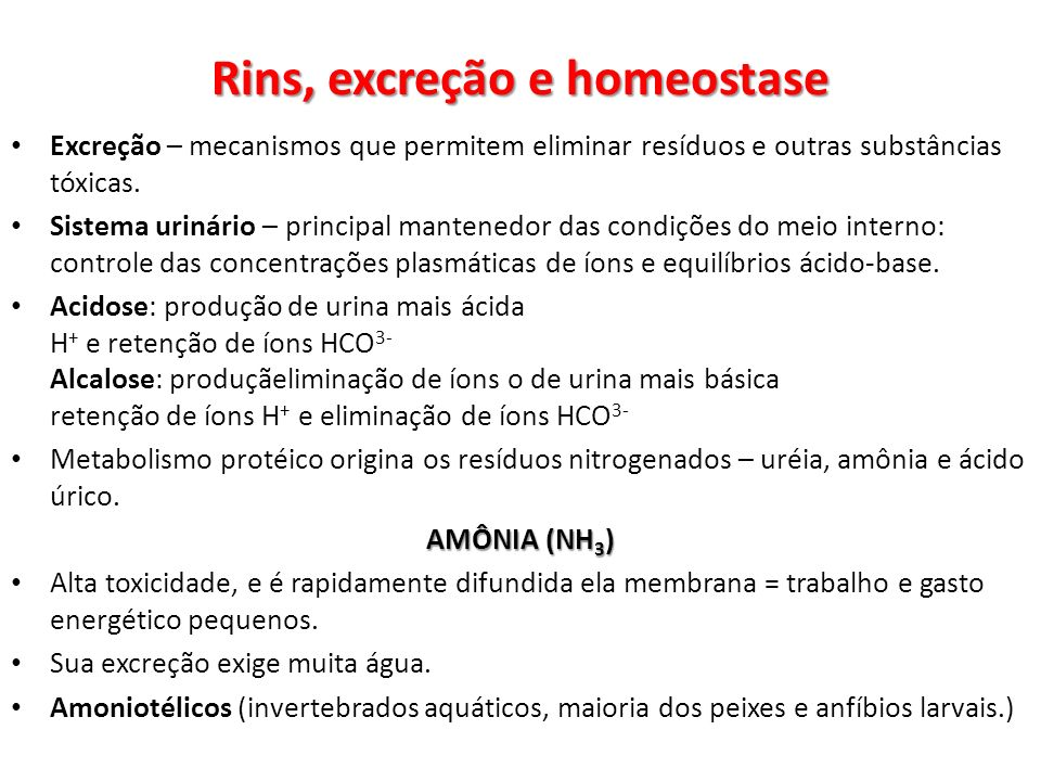 Rins, excreção e homeostase