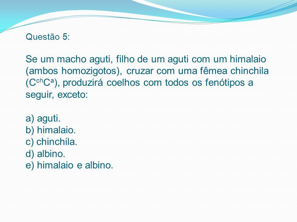 Questão 5: Se um macho aguti, filho de um aguti com um himalaio (ambos homozigotos), cruzar com uma fêmea chinchila (CchCa), produzirá coelhos com todos os fenótipos a seguir, exceto: a) aguti.