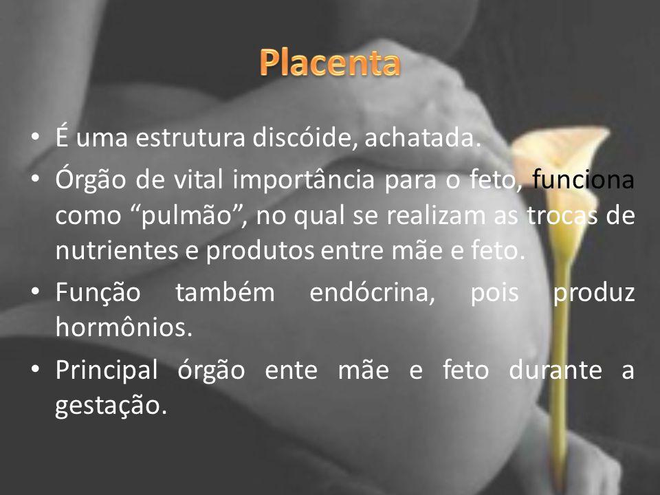 Placenta É uma estrutura discóide, achatada.