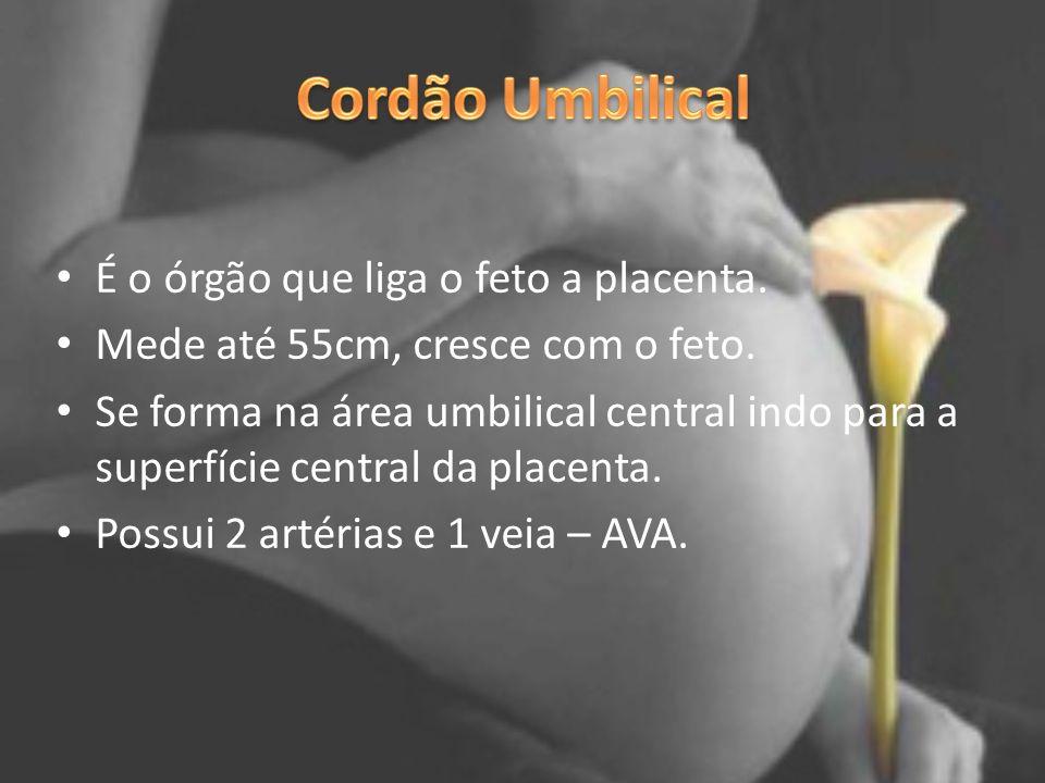 Cordão Umbilical É o órgão que liga o feto a placenta.