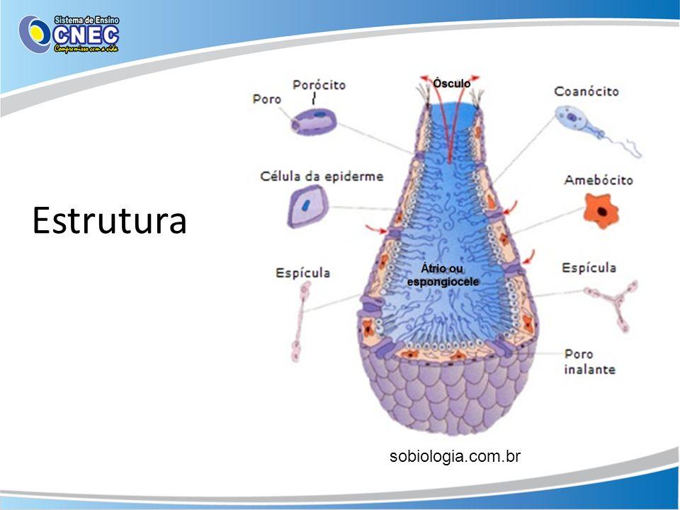 Estrutura sobiologia.com.br