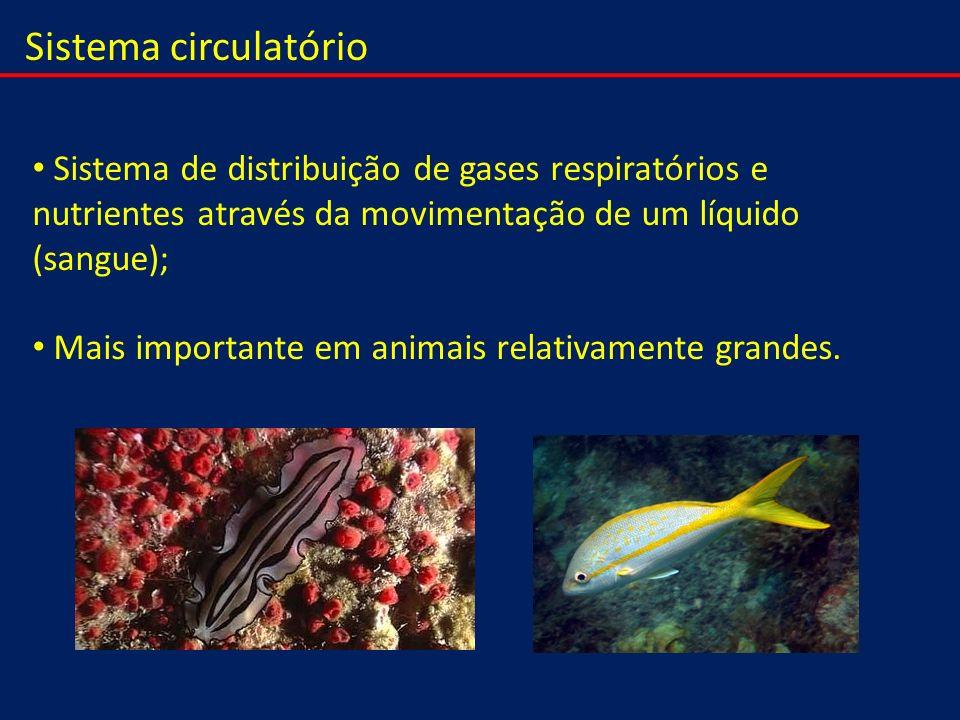 Sistema circulatório Sistema de distribuição de gases respiratórios e nutrientes através da movimentação de um líquido (sangue);
