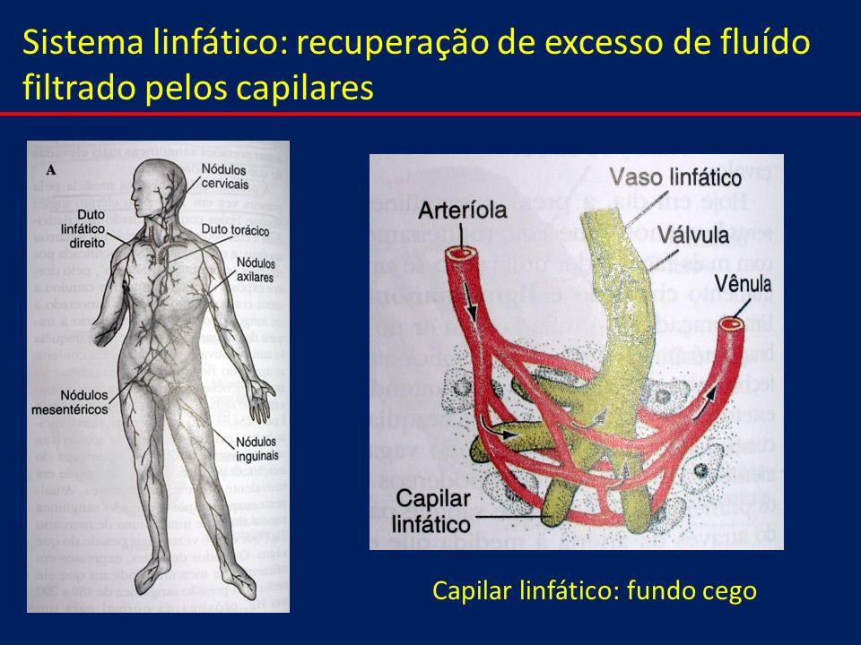 Capilar linfático: fundo cego