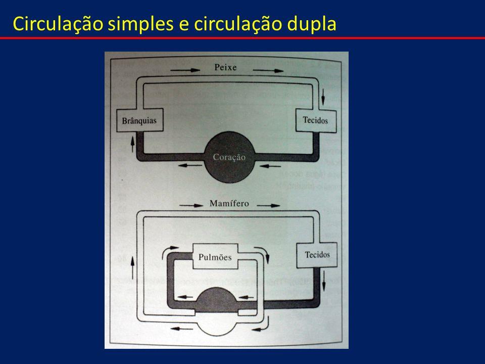 Circulação simples e circulação dupla