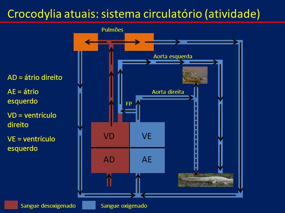 Crocodylia atuais: sistema circulatório (atividade)