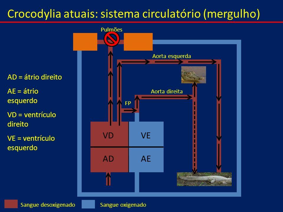 Crocodylia atuais: sistema circulatório (mergulho)