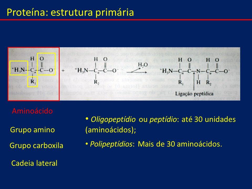 Proteína: estrutura primária