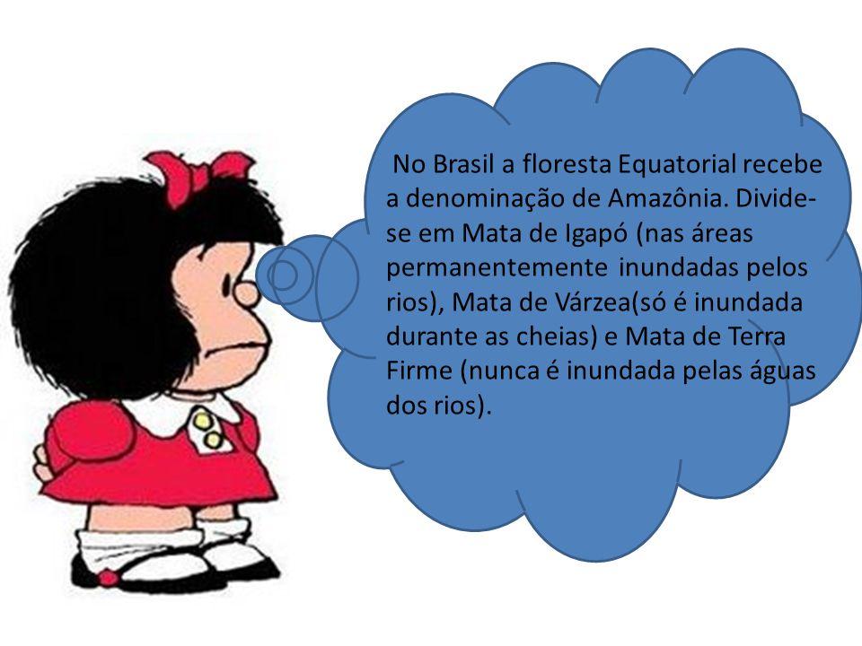 No Brasil a floresta Equatorial recebe a denominação de Amazônia