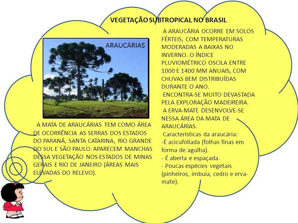 VEGETAÇÃO SUBTROPICAL NO BRASIL