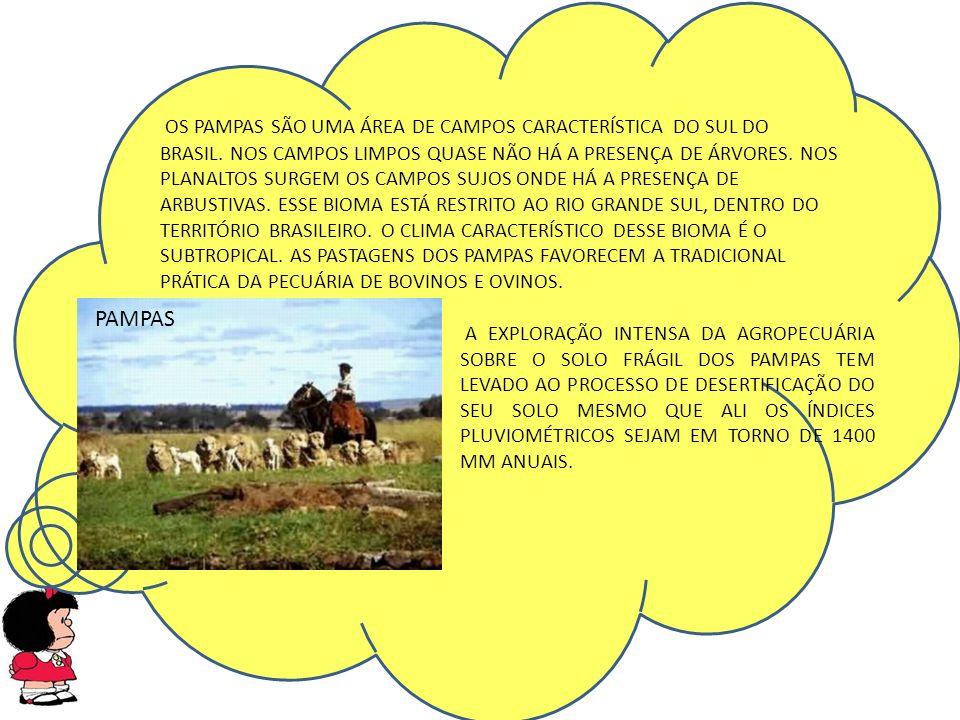 OS PAMPAS SÃO UMA ÁREA DE CAMPOS CARACTERÍSTICA DO SUL DO BRASIL