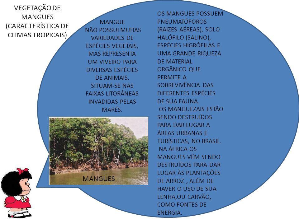 VEGETAÇÃO DE MANGUES (CARACTERÍSTICA DE CLIMAS TROPICAIS)