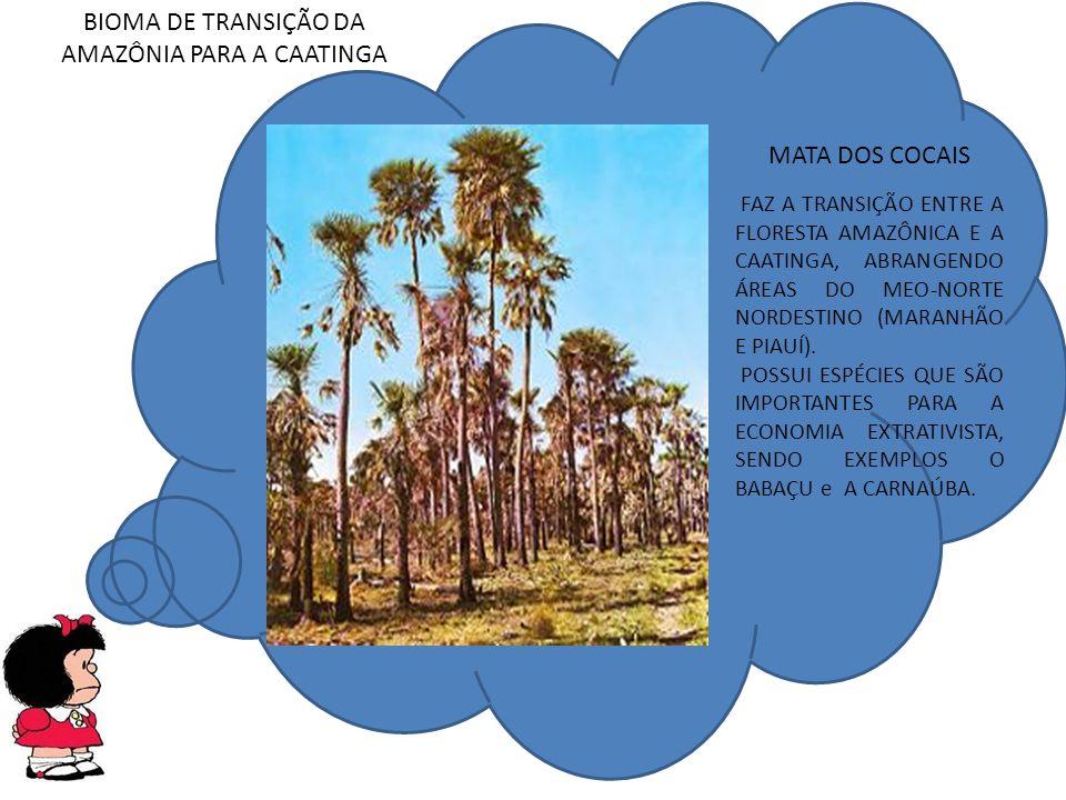 BIOMA DE TRANSIÇÃO DA AMAZÔNIA PARA A CAATINGA