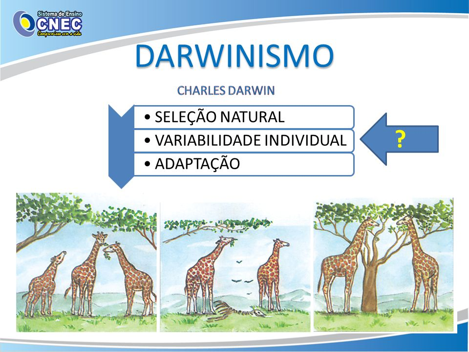 DARWINISMO CHARLES DARWIN SELEÇÃO NATURAL VARIABILIDADE INDIVIDUAL