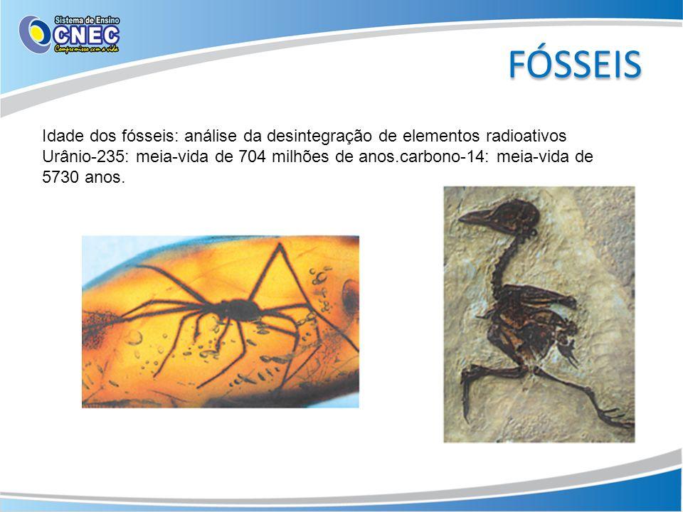 FÓSSEIS Idade dos fósseis: análise da desintegração de elementos radioativos.