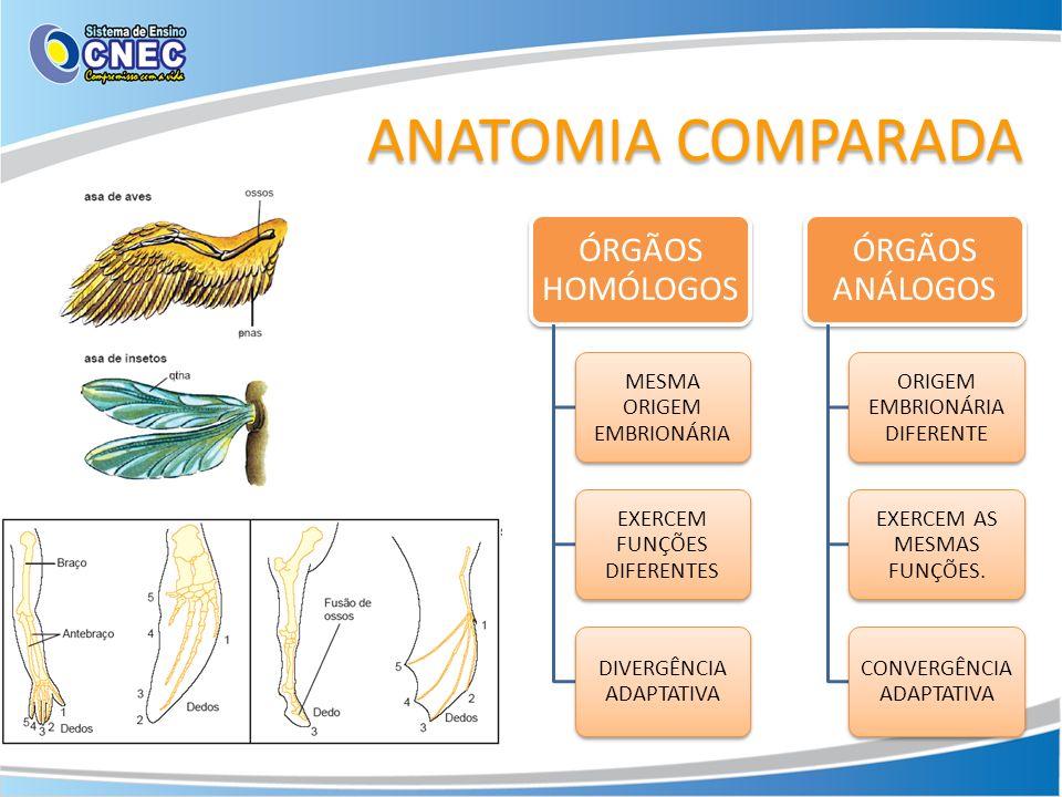 ANATOMIA COMPARADA ÓRGÃOS HOMÓLOGOS ÓRGÃOS ANÁLOGOS
