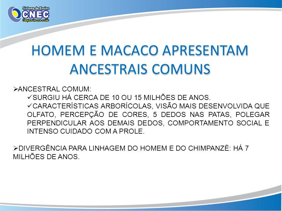 HOMEM E MACACO APRESENTAM ANCESTRAIS COMUNS
