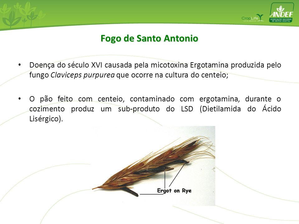 Fogo de Santo Antonio