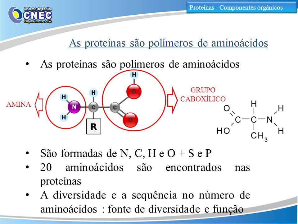 As proteínas são polímeros de aminoácidos