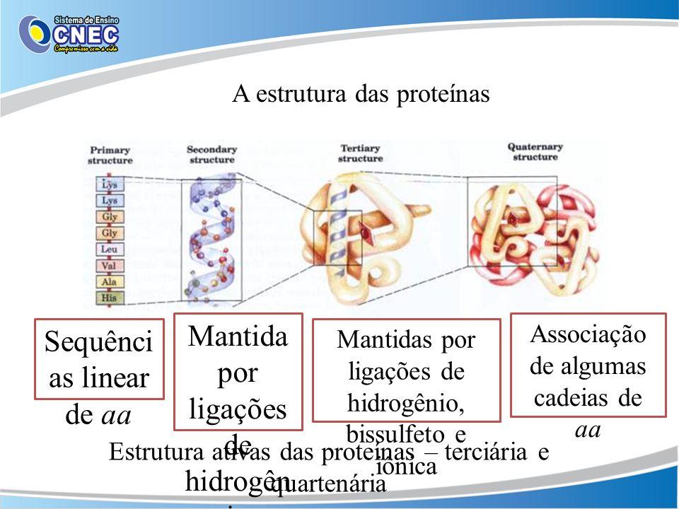 Mantida por ligações de hidrogênio Sequências linear de aa