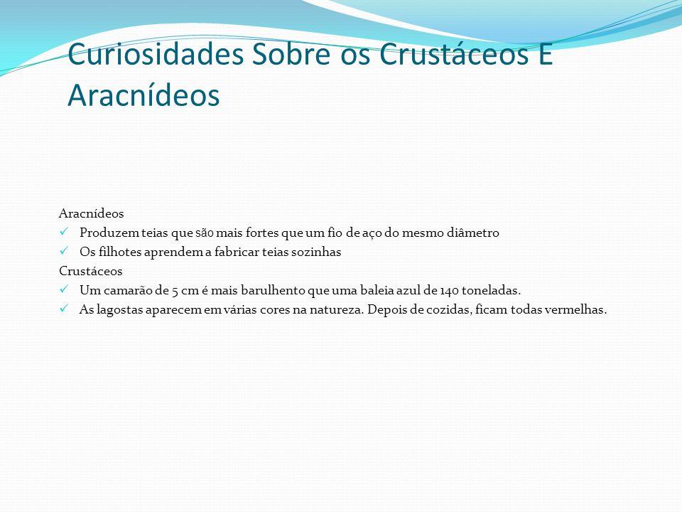 Curiosidades Sobre os Crustáceos E Aracnídeos