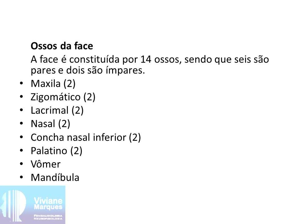 Ossos da face A face é constituída por 14 ossos, sendo que seis são pares e dois são ímpares. Maxila (2)
