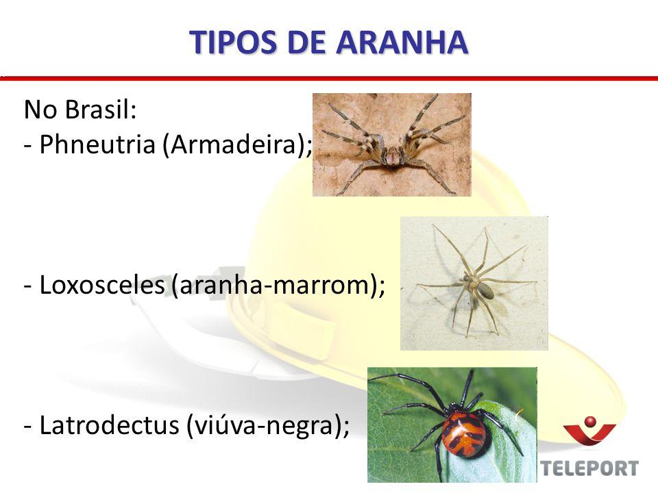 TIPOS DE ARANHA No Brasil: Phneutria (Armadeira);