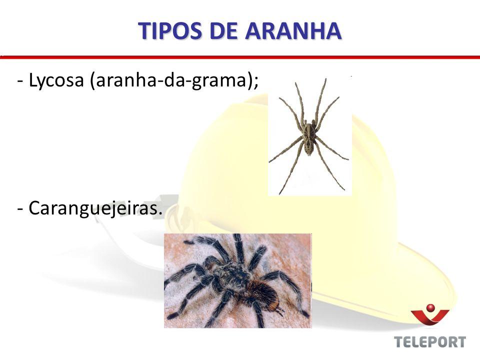 TIPOS DE ARANHA Lycosa (aranha-da-grama); Caranguejeiras.