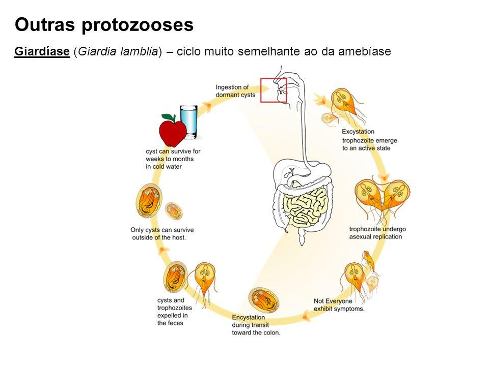 Outras protozooses Giardíase (Giardia lamblia) – ciclo muito semelhante ao da amebíase