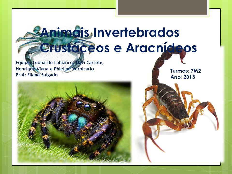 Animais Invertebrados Crustáceos e Aracnídeos