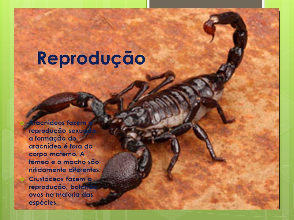 Reprodução Aracnídeos fazem a reprodução sexuada, a formação do aracnídeo é fora do corpo materno. A femea e o macho são nitidamente diferentes.
