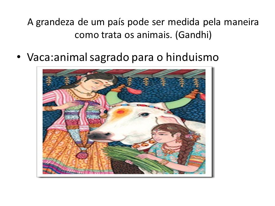 Vaca:animal sagrado para o hinduismo