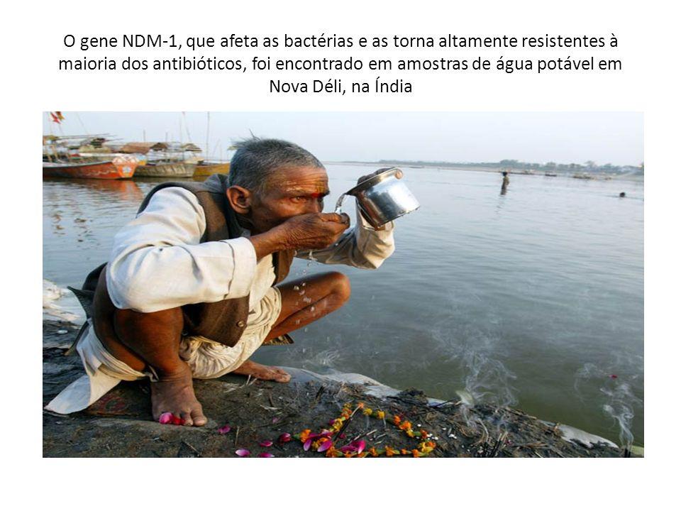 O gene NDM-1, que afeta as bactérias e as torna altamente resistentes à maioria dos antibióticos, foi encontrado em amostras de água potável em Nova Déli, na Índia