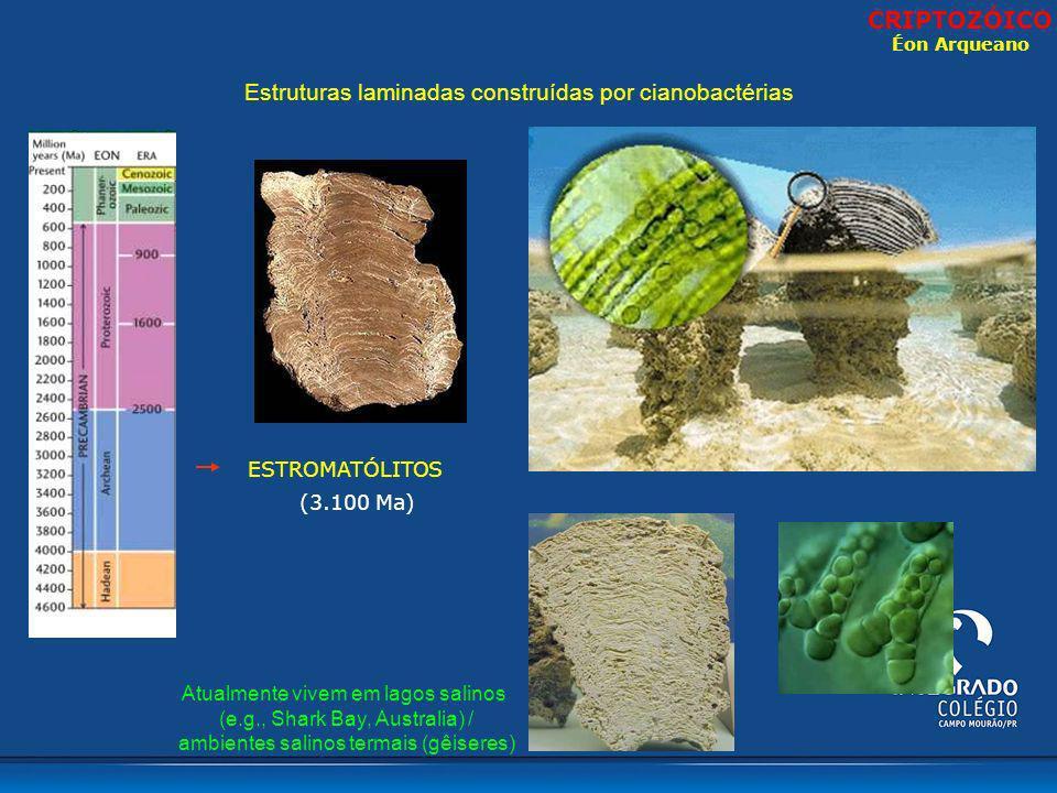 CRIPTOZÓICO Éon Arqueano. Estruturas laminadas construídas por cianobactérias. ESTROMATÓLITOS. (3.100 Ma)