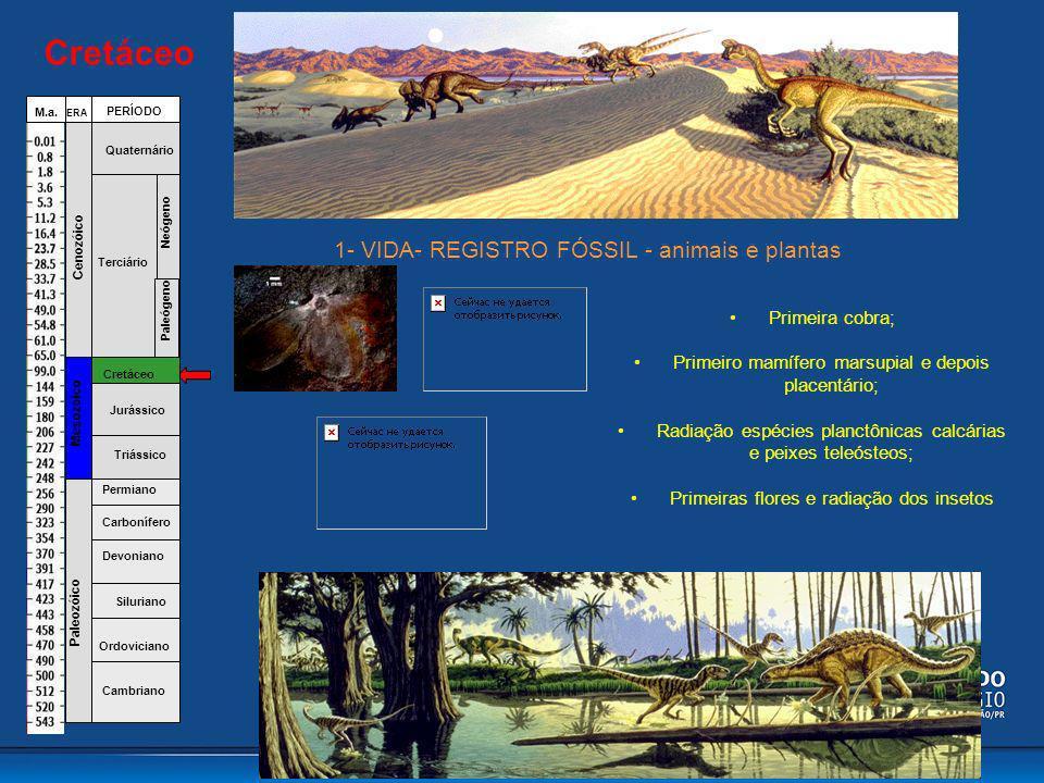 Cretáceo 1- VIDA- REGISTRO FÓSSIL - animais e plantas Primeira cobra;
