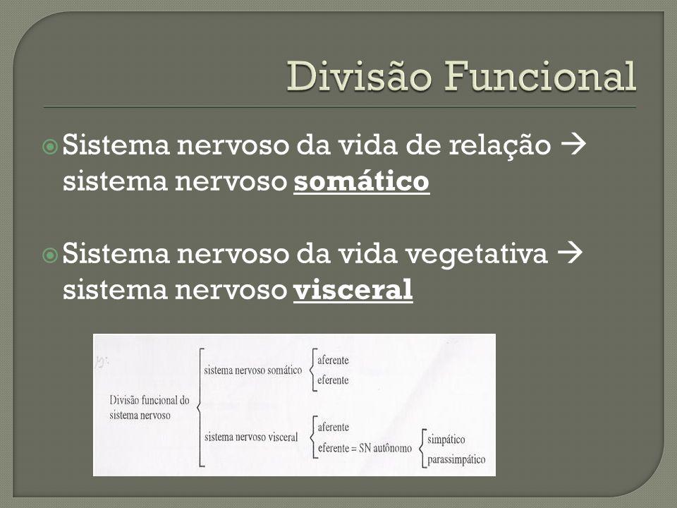 Divisão Funcional Sistema nervoso da vida de relação  sistema nervoso somático.