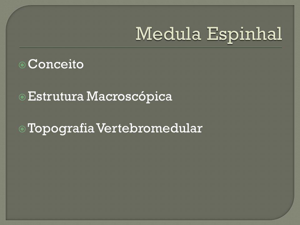 Medula Espinhal Conceito Estrutura Macroscópica