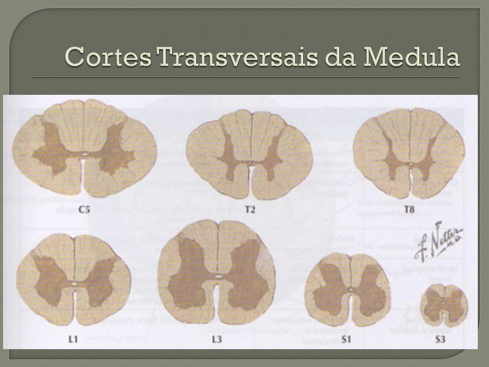 Cortes Transversais da Medula