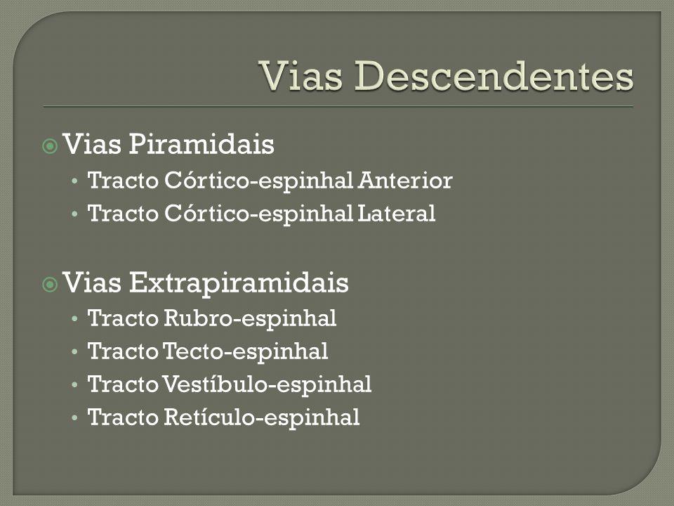 Vias Descendentes Vias Piramidais Vias Extrapiramidais