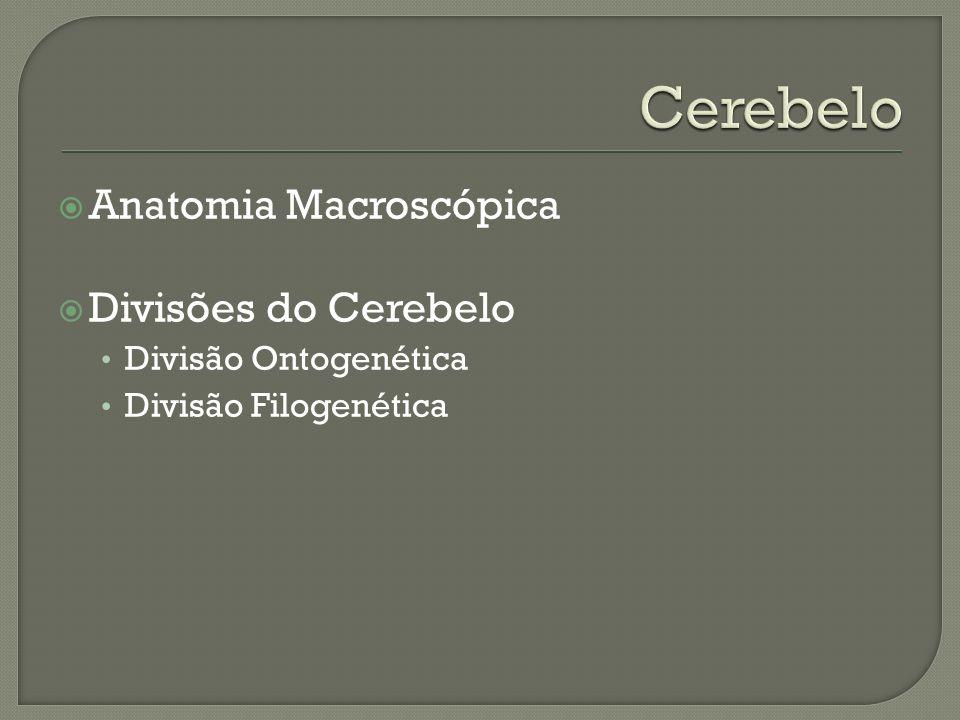 Cerebelo Anatomia Macroscópica Divisões do Cerebelo